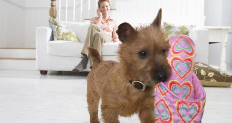 Hacer un par de zapatos para tu perro, es sencillo; protegerán sus patas en los días lluviosos y fríos.