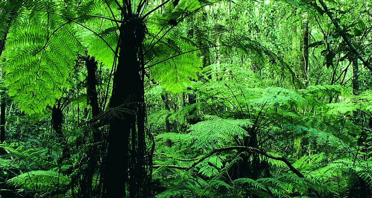 Ferns and tree ferns have been on earth since the time of the dinosaurs.