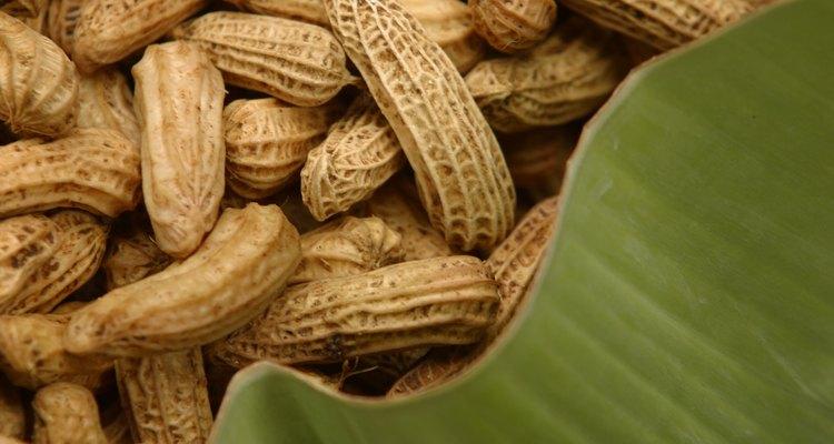 Os dois tipos mais cultivados de amendoim são o Virginia e o Espanhol
