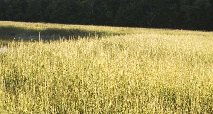 Las plantas de pantano ofrecen muchas características importantes para la vida silvestre.