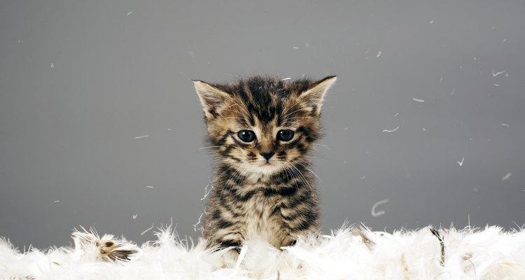 O comportamento da mamãe gato com seus filhotes muda conforme o filhote cresce