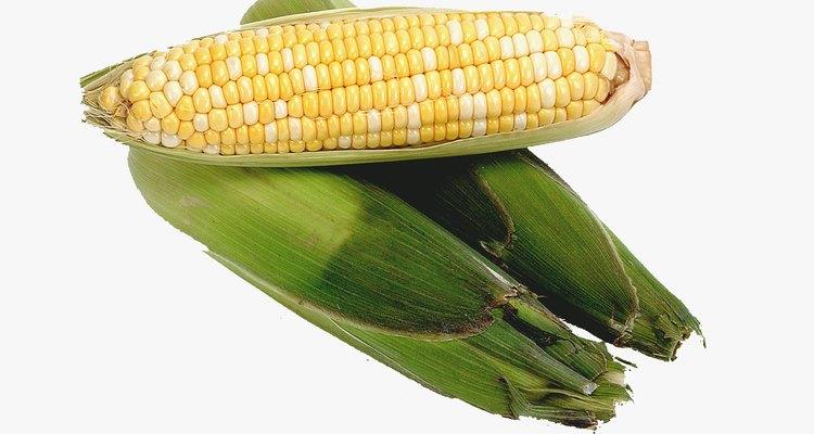 A primeira porção visível da espiga de milho é o ponto de crescimento