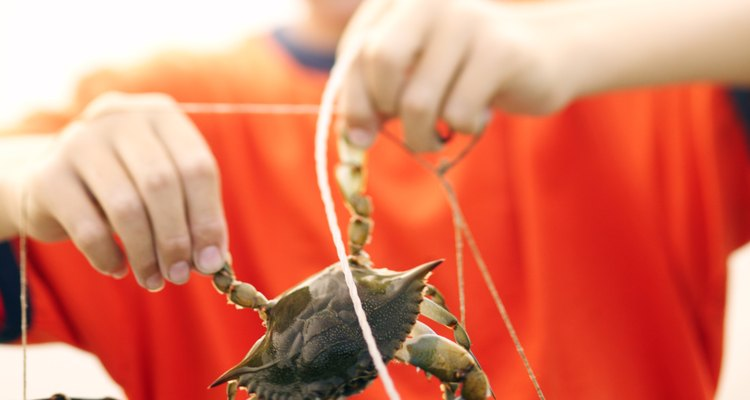 Puedes pescar cangrejos en los lagos del oeste de Washington.