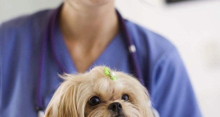 Sempre consulte um veterinário antes de administrar qualquer medicamento