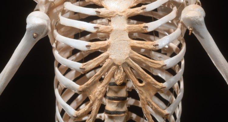 A disfunção das costelas é uma frequente causa de dores nas costas e no peito