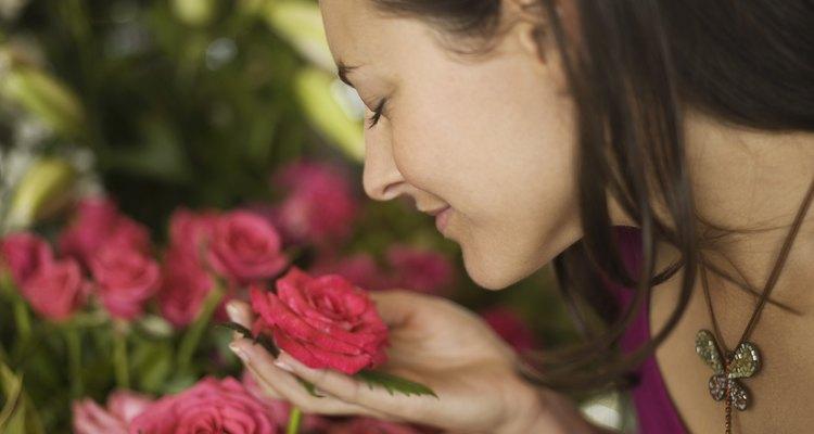 É possível plantar rosas que você recebe em um buquê de presente