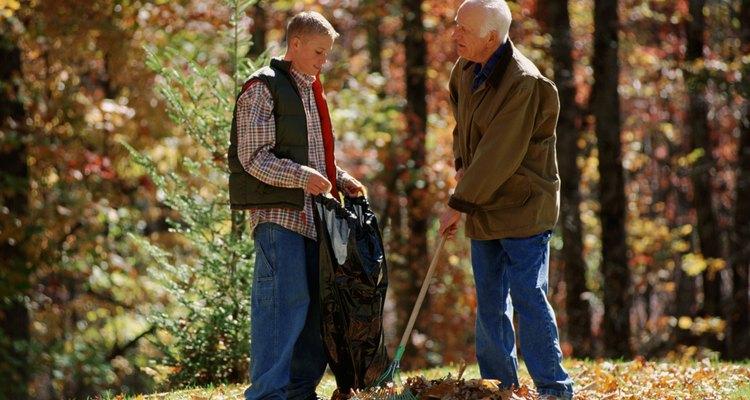 Las hojas de los árboles son responsabilidad del dueño del terreno donde caen.