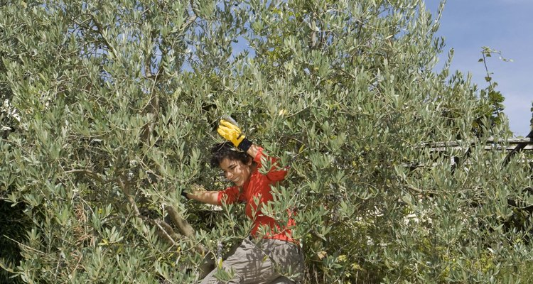 Regue regularmente e faça uma colheita de frutas recompensadora