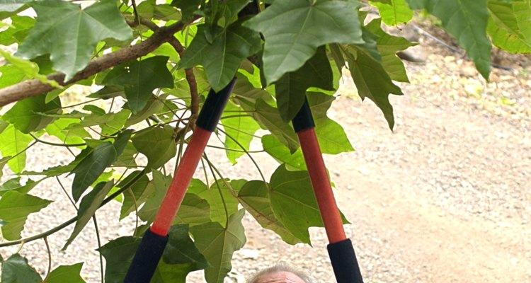 Las tijeras de desramar son utilizadas para podar plantas grandes.