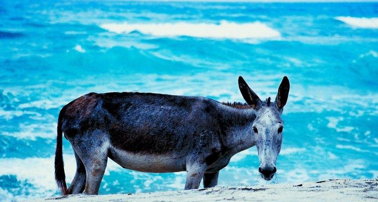 Las playas en las afueras de Barranquilla tienen un aire campestre.