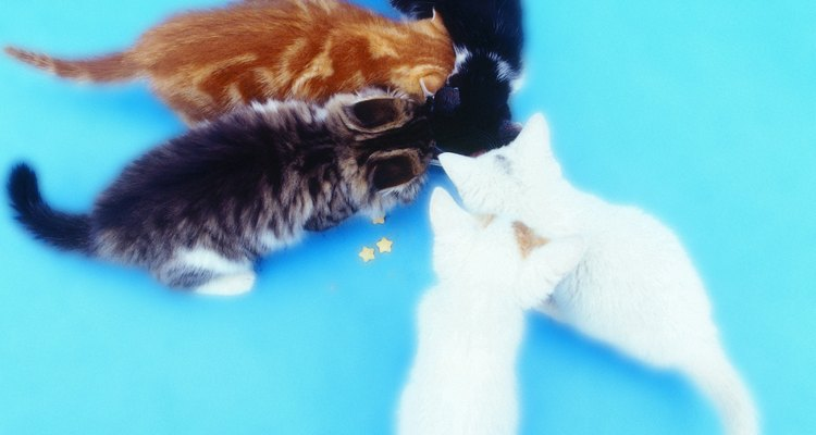 La miel puede contener bacterias, lo que puede ser fatal para los gatitos.