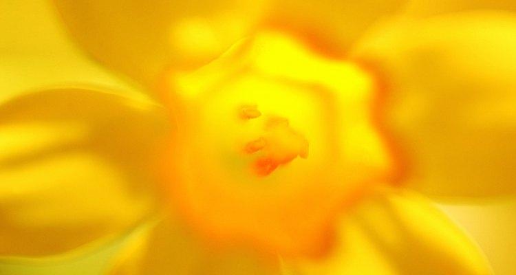 Pinta la máscara con un color de base amarillo o anaranjado claro.
