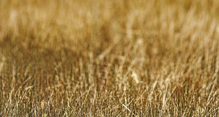É possível reverter o amarelamento da grama