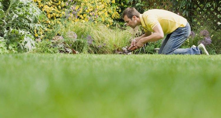 El musgo tiende a crecer en lugares húmedos, oscuros y ácidos.