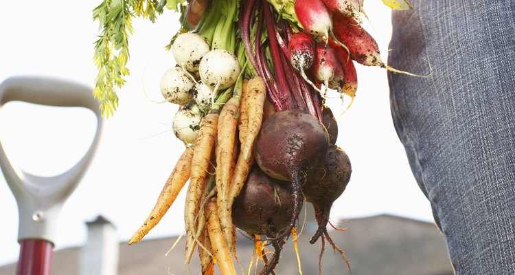 Carrots, radishes and beets are root crops.