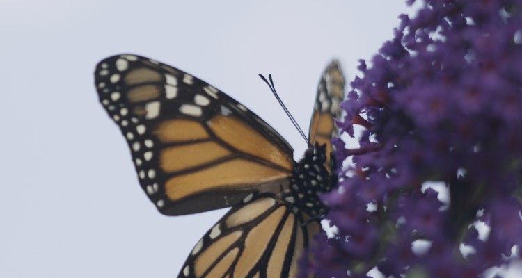 La Reserva de la Biósfera de la Mariposa Monarca es patrimonio desde 2008.