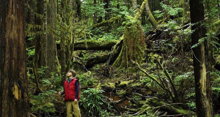 La belleza de las selvas está siendo destruida lentamente año tras año.