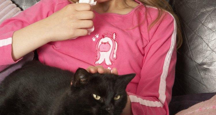 Os gatos também podem ficar gripados