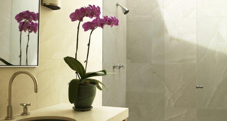 El exceso de luz es la causa más común del amarillento de las hojas en las orquídeas.