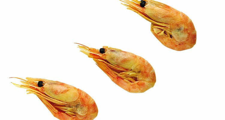 Acclimatise the prawns to their new environment