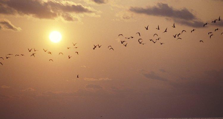Bandadas de pájaros pueden abandonar sus nidos antes de los desastres naturales.