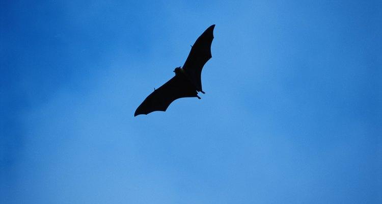 Los murciélagos pueden controlar las poblaciones de insectos.
