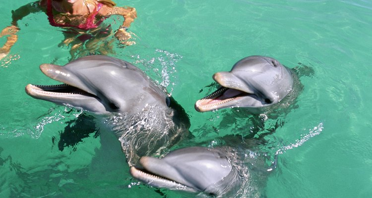 Swim with dolphins in Alcudia.