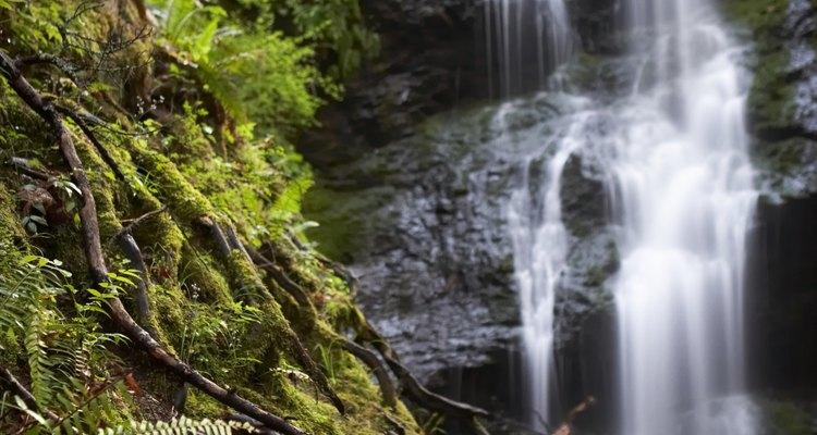 Preservar la naturaleza ha sido una de las preocupaciones más grandes de los últimos 30 años.