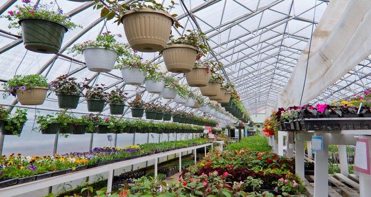 """Elige algunas plantas de interiores y exteriores si ella tiene """"buena mano"""" para las plantas."""