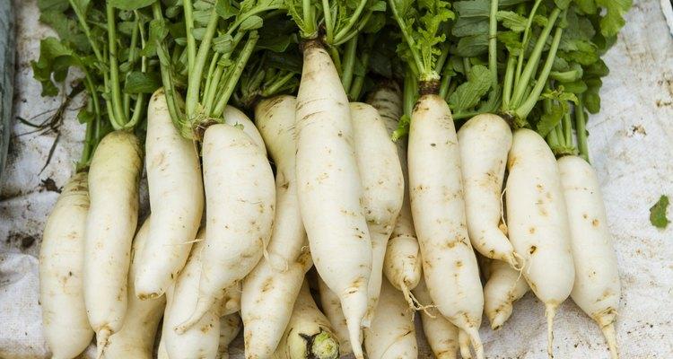 White radish root