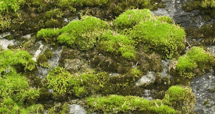 O vinagre é um produto natural para acabar com os musgos