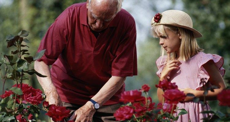 Aprenda a cuidar dos rosários de seu jardim