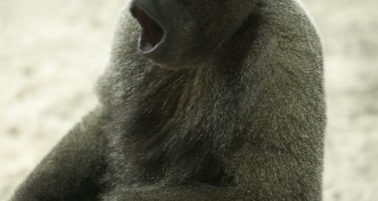 Agir como um macaco fará as pessoas rirem