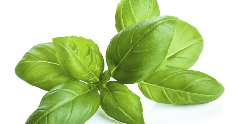 White spots on basil leaves can be a problem.