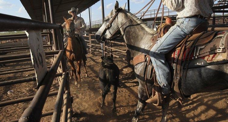 Los vaqueros todavía reúnen el ganado en Abilene.