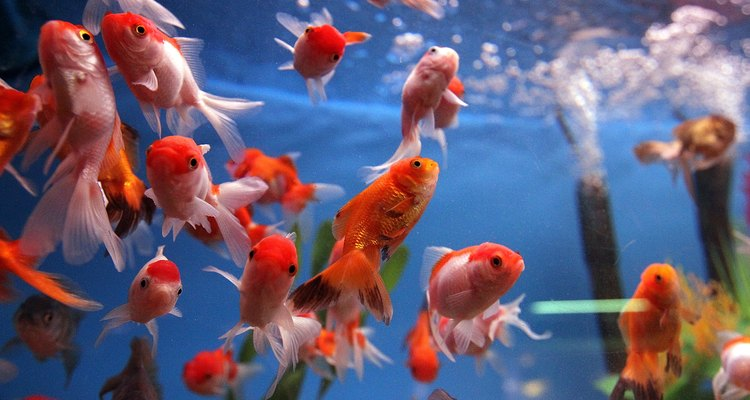 Without a mesh cover, fish can jump out of an open tank.