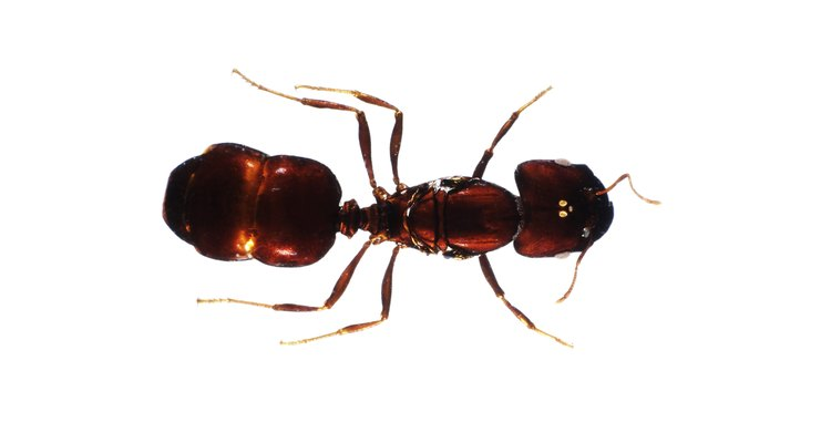 Knowing what signs to look for will make it much easier to locate and deal with an ant infestation.