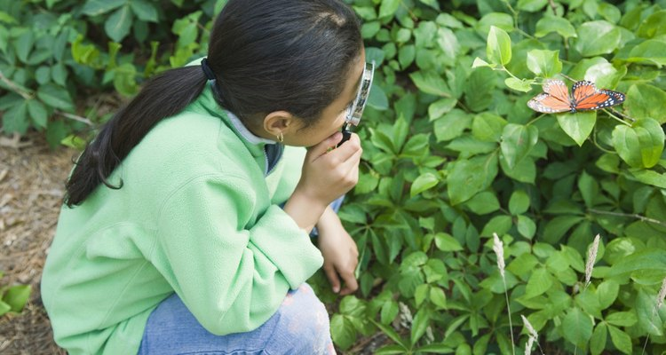 Uma menina observa uma borboleta com uma lupa