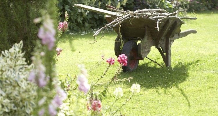 Cuidando de seu quintal