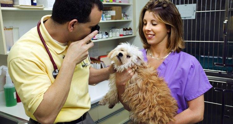 Apenas um veterinario poderá atestar se é um caso de ácaros de ouvido