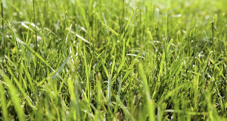 La limpieza del jardín trasero en otoño y la primavera ayuda a mantener un césped saludable.