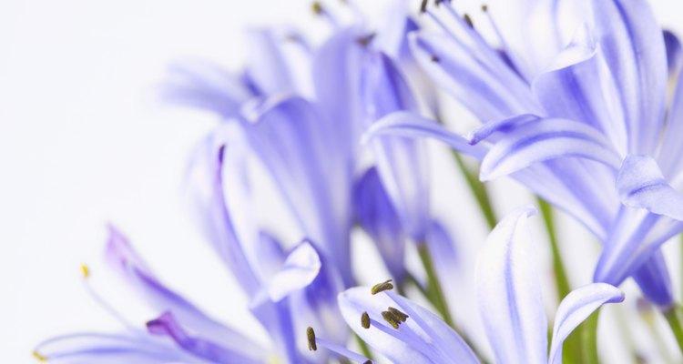 Use decoração e flores que complementem a madeira de cerejeira