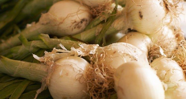 Puedes cosechar cebollas en cualquier etapa.