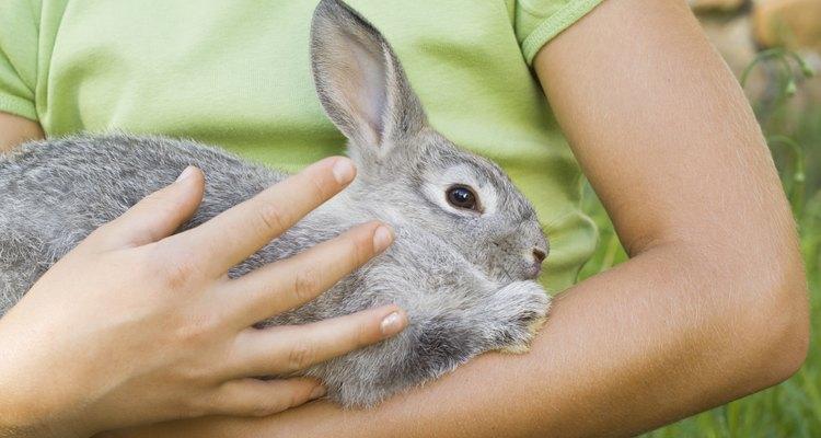 Aprenda a treinar o seu coelho