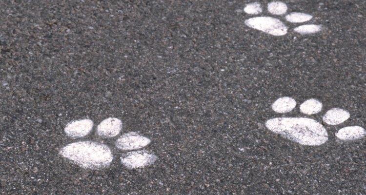 Haz huellas de animales que tu hijo puedan identificar.
