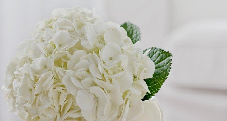 El brillante color de las hortensias se mantinen para que puedas hacer arreglos florales o coronas.