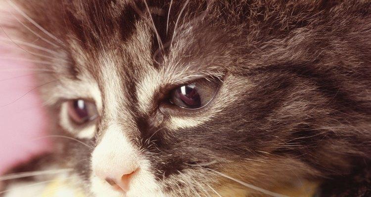 Leve seu animal ao veterinário se ele parar de comer repentinamente