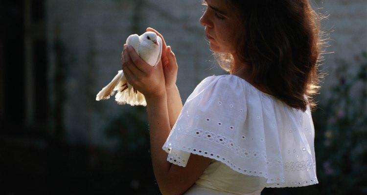 Cuidar a una paloma mascota no es algo que debe tomarse a la ligera.