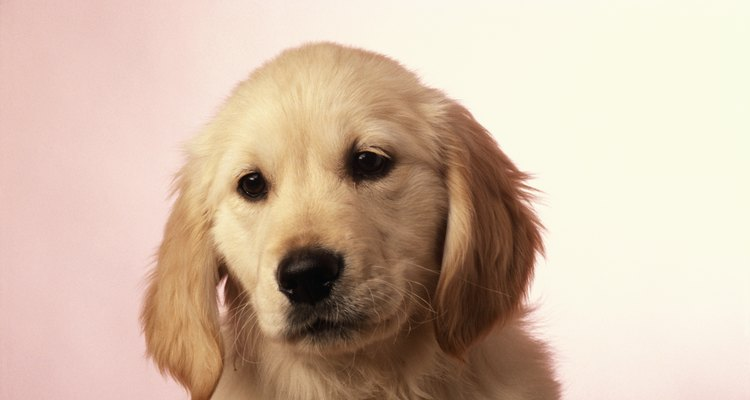 Se o seu cachorro não estiver evacuando direito, leve-o a um veterinário