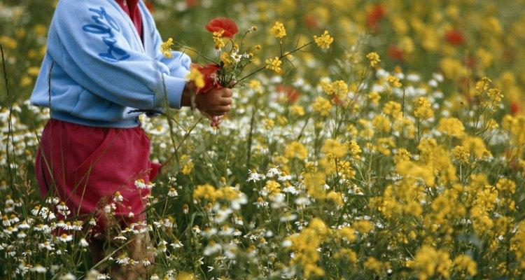 Ayúdalos a plantar algunas plantas que desprendan un aroma encantador como la menta, las flores de lavanda o las flores de un buen aspecto.